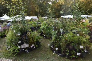 lowgardens-nurseries_esthetique